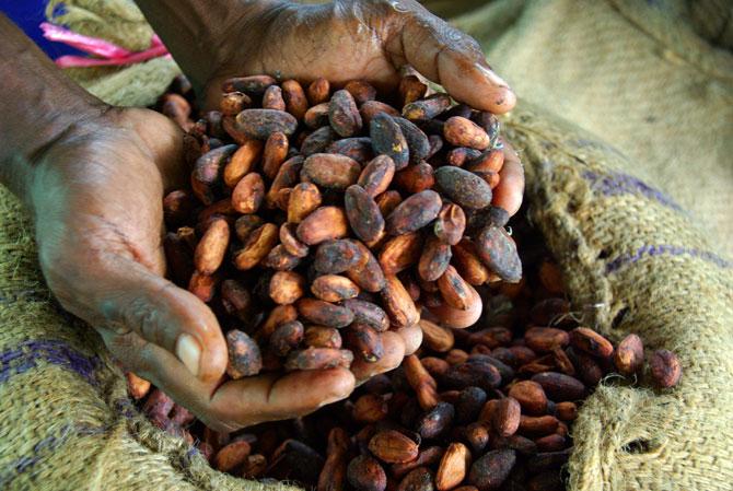 Необработанные зерна