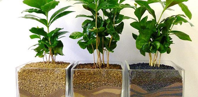 Растения в стеклянных горшках